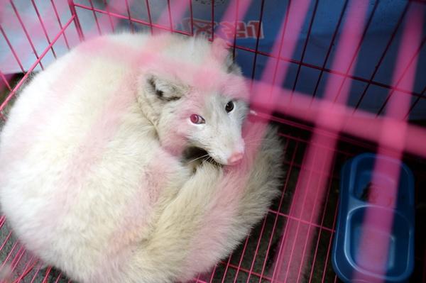 动物感冒难受的图片大全