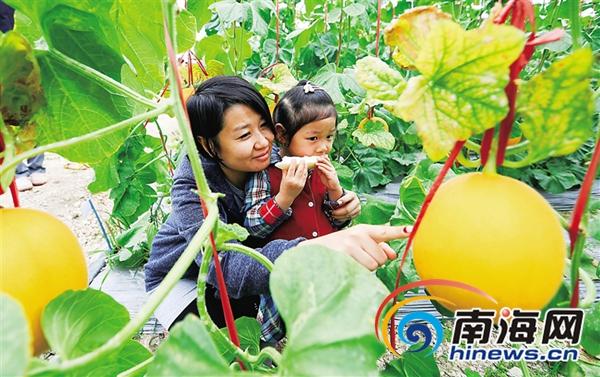 传统农产品如何增值且听海南省人大代表怎么说