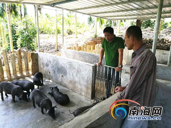 万宁坡头村村委会书记杨昌英:我要为村民做些实实在在的事