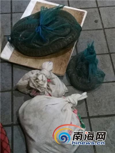 定安3人市场内贩卖珍贵濒危野生动物被刑事拘留