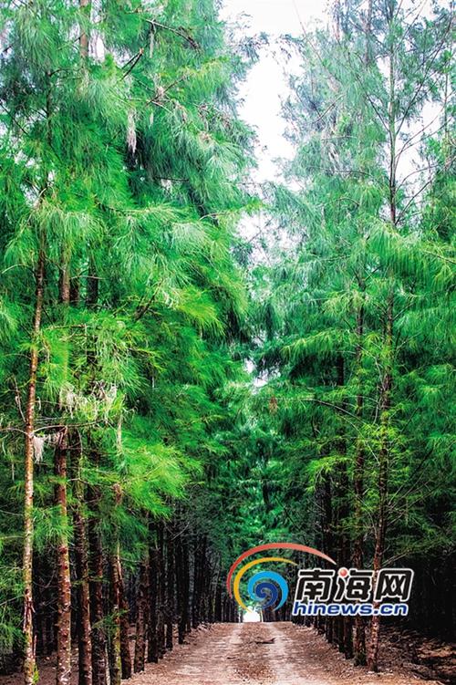 榼藤等;观根类主要观赏植物根茎的色泽或形状等特性,如银叶树的板根