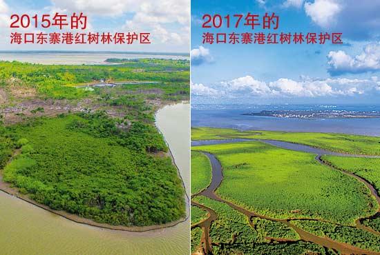 海口市东寨港红树林国家自然保护区复绿前后