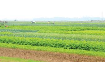 临高县帮扶广大农户种植常年瓜菜发家致富