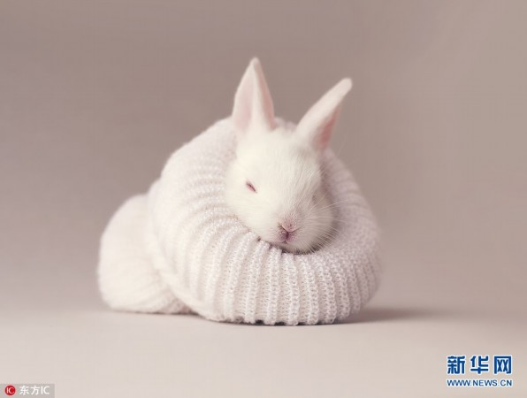 复活节兔子当主角 呆萌小兔兔乖巧惹人爱(组图)