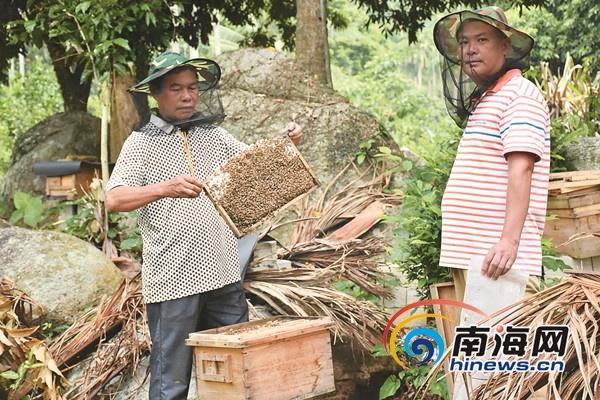 <b>万宁北大村驻村第一书记卓居易:特色产业+文化打造乡村旅游</b>