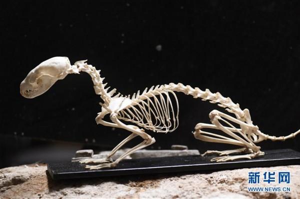 莫斯科达尔文博物馆动物标本制作车间(组图)__海南网图片