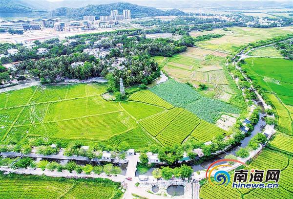 美丽乡村海南样本  三亚青塘村:孩子们嬉戏的天堂