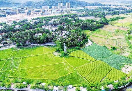 三亚亚青塘村:孩子们嬉戏的天堂