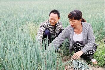"""临高罗文村36户村民""""抱团""""种香葱尝到甜头"""
