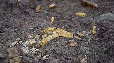 吉林一工地发现白垩纪恐龙化石群