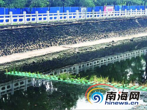 海口万绿园种10米长绿色植物实验带帮助水体修复