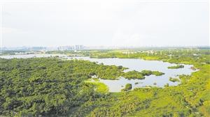 海口规划建设45处湿地保护小区主要保护珍稀动植物