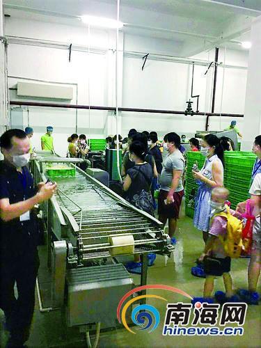 海南首座工业化豆芽厂向公众开放市民可实地了解加工全过程