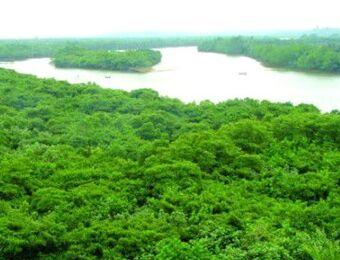 文昌将投入1.2亿元实施清澜红树林退塘还林