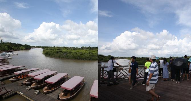 网媒记者走进海口东寨港红树林 感受人与自然和谐景象