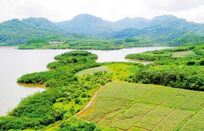 白沙坡生村菠萝成致富金 预计亩产3000公斤