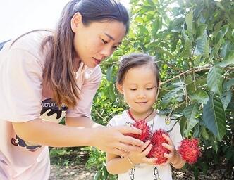 保亭启动全域乡村旅游红毛丹采摘季活动