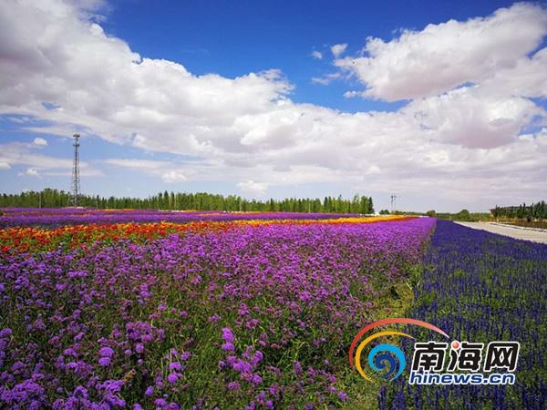 金沙岛旅游区位于中国第四大沙漠——腾格里沙漠东南缘,与腾格里湖