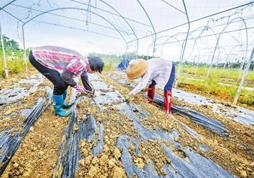 博鳌镇打造销售品牌农产品 个别种植区设采摘区