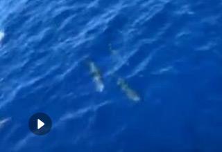 美呆了!近百只海豚现身三亚近海海域愉快玩耍
