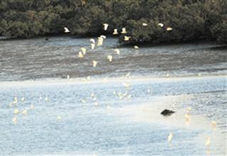 海口湿地保护区域美景如画