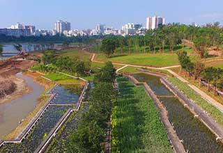 海口凤翔公园绿化工程接近尾声