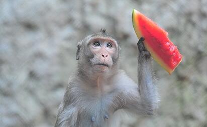 萌翻!三亚动物园的小动物们吃冰棍和西瓜避暑
