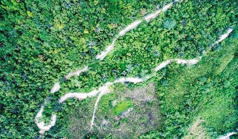 """陵水吊罗山旅游公路设计三易其稿 一条给树""""让道""""的路"""