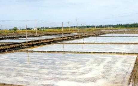 省人大调研组来临高调研盐业体制改革工作