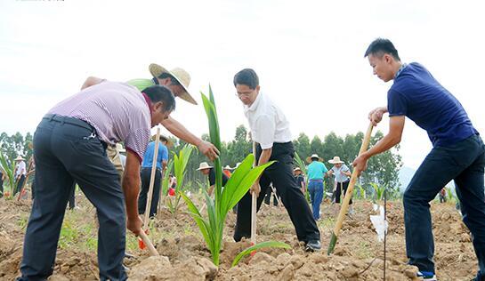 昌江2017今天义务植树2000余株