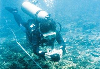 三亚海洋生态修复效果显著