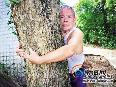 """琼海一棵80多年的龙眼树病了 主人想找""""名医""""看看"""