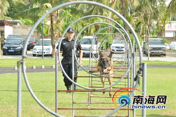 <b>海南省警犬技术工作打造实战尖兵 连续两年进入全国前六名</b>