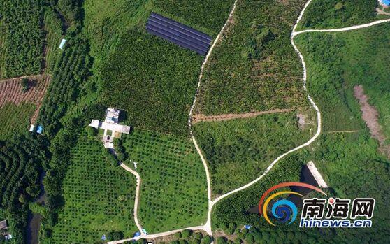 儋州采摘游预热国庆假期 游客提前度假乐享农家乐