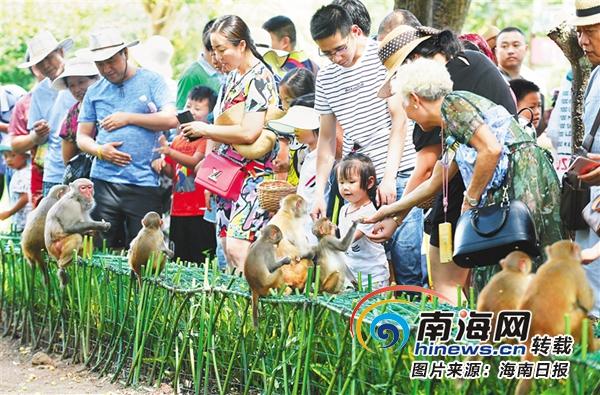 """<b>海南生态游 陵水南湾猴岛1500余只""""猴哥""""悠享慢生活</b>"""