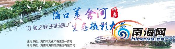 海口美舍河凤翔湿地公园采风14日举行 邀50名摄影师参加