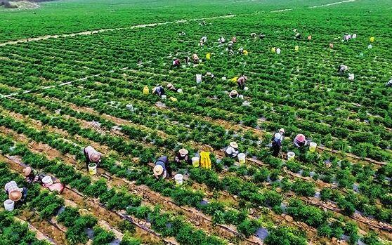 儋州斥资128亿元推产业融合发展 让高效农业吸金