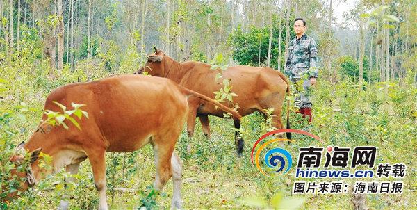 蔡於旭放弃年产值超千万元的企业 返乡带108户农户养牛