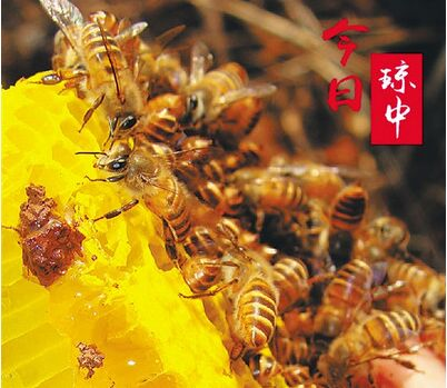 琼中大力推广和发展养蜂业 蜂蜜酿出村民甜蜜生活