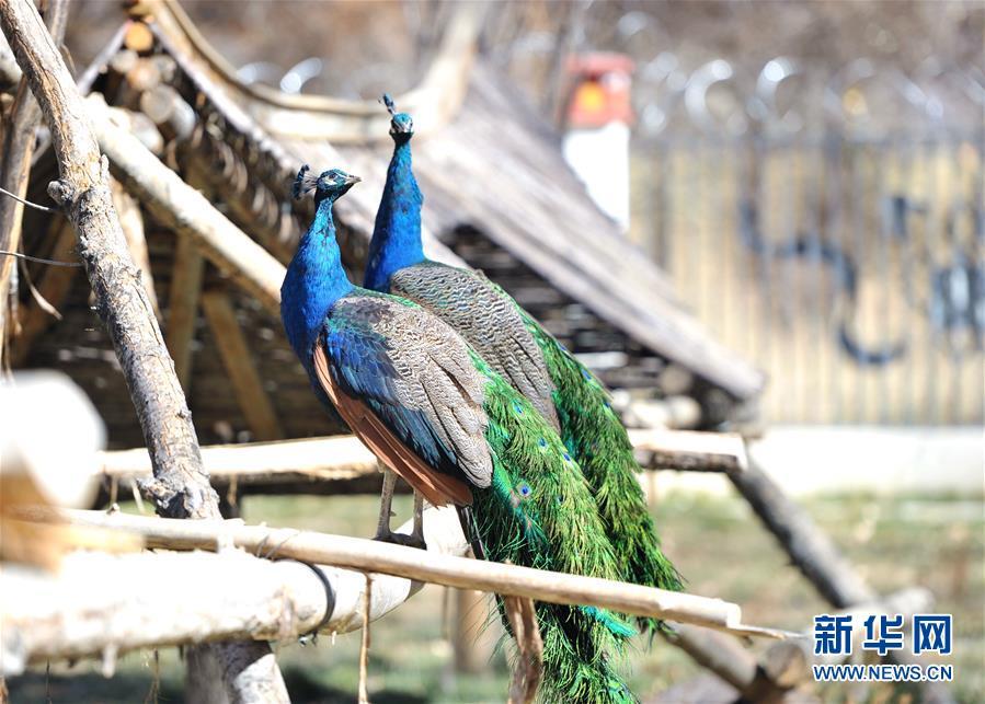 拉萨曲水动物园:高原上的动物之家