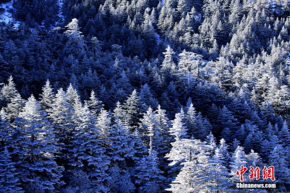 连日来,受冷空气影响,凉山州螺髻山景区气温降低。日前,该景区迎来今冬第一场雪,大雪把美丽的螺髻山景区装扮成了玉树银花,雪景美不胜收。据了解,螺髻山风景区位于四川省西昌市城南30公里处,总面积2400平方公里,其中主要景区面积1083平方公里,主峰海拔4359米。螺髻山是我国已知山地中罕见的保持完整的第四纪古冰川天然博物馆,是国家4A级风景区。 钟玉成 摄