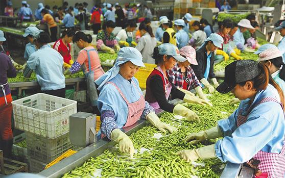 厉害啦!每年约有4.7亿斤农产品从昌江这个集配中心销往全国各地