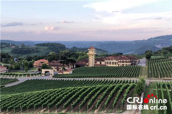 市场大潜力足 中国葡萄酒市场受巴西酒庄青睐