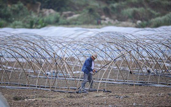 万宁连续阴雨 为保证保证农业生产农户都在干这件事
