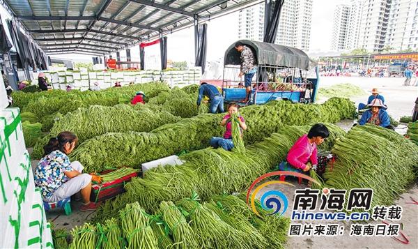 三亚谋划打造琼南瓜菜集散交易中心 畅通产销渠道