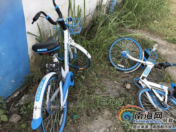 """哈罗共享单车未报备 入驻儋州10多天300多辆接连""""失踪"""""""