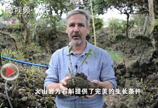 """【椰视频】两会外传:一棵""""草""""如何让海南一个村庄蜕变"""