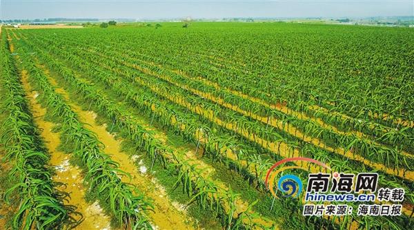 海南深入推进农业供给侧结构性改革 打造热带特色高效农业王牌