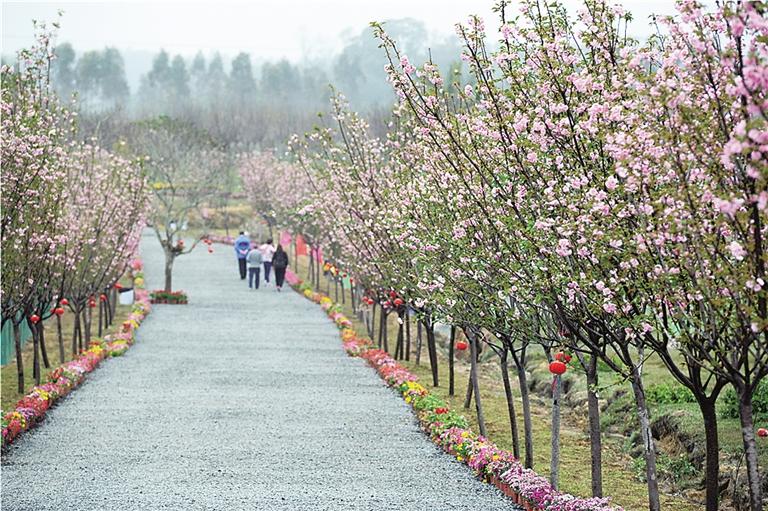 """约吧,踏春好去处!定安南丽湖樱花节进入""""盛樱""""阶段"""