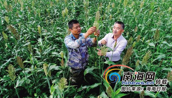 海南一系列举措推动农业提质增效